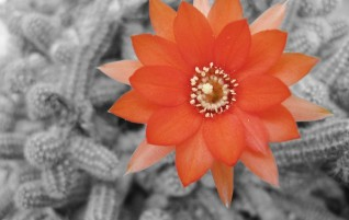 Fiore d'Amore
